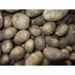 Patata kennebec eco kg