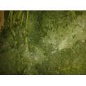 Col pluma (KALE) eco